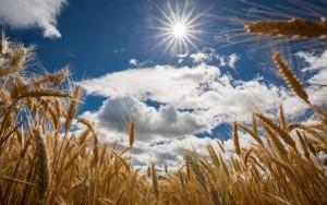 Campo-orecchie-cielo-sole-nuvole-estate-4-Formato-Decorazione-Della-Casa-della-Tela-di-canapa-Poster