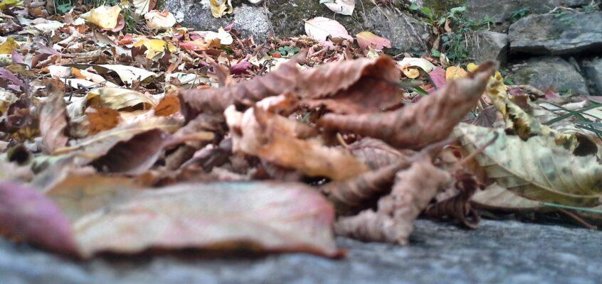 Di argilla, autunno e processo creativo.